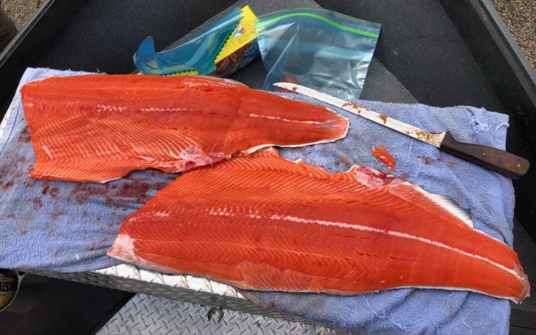 Chinook Salmon Fishing Update