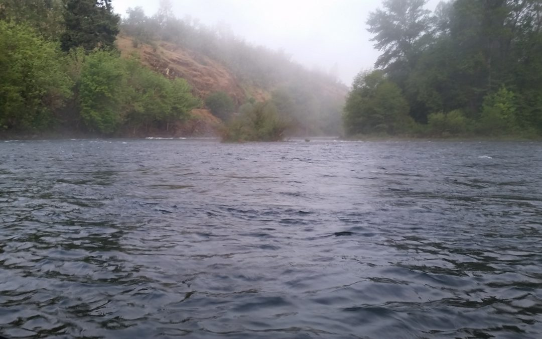 Are there bass in the Rogue River?