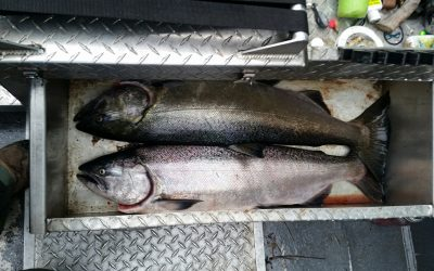 Upper Rogue River Salmon Fishing Reports